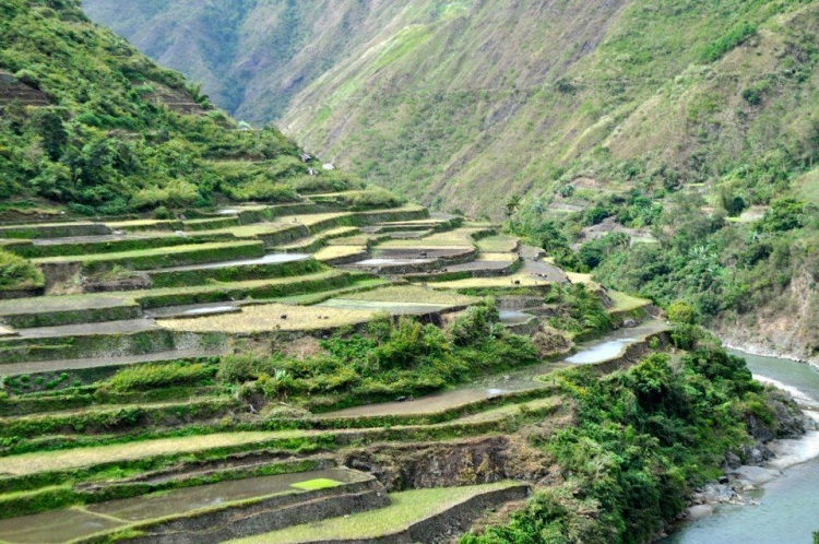 terraced rice feilds